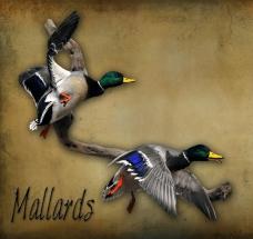 2mallards